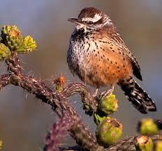 AZ Bird