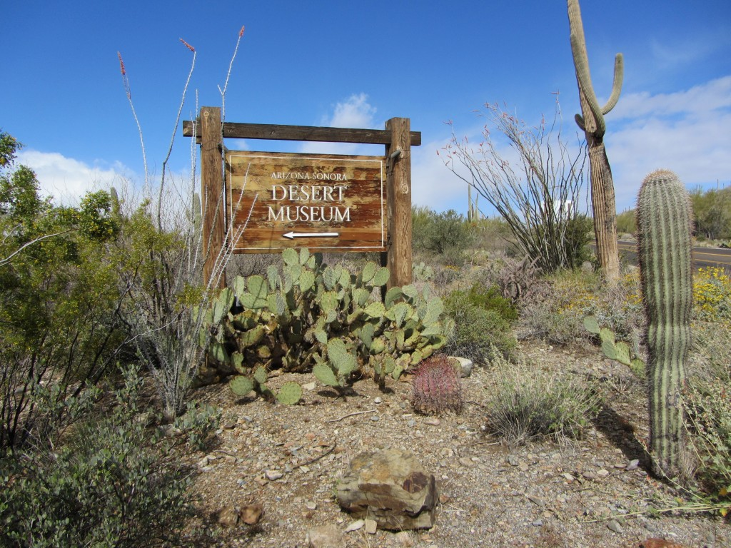 Arizona Bike Tour, Sonoran Desert Museum