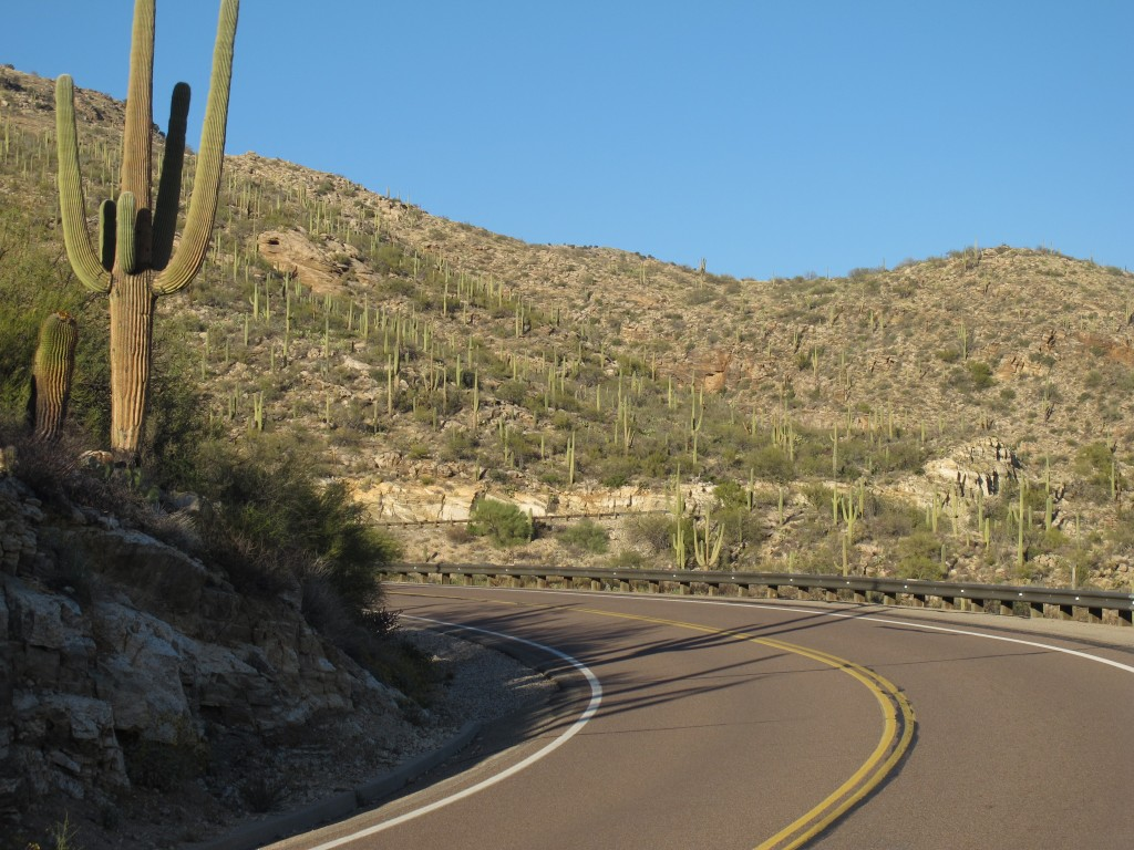 Arizona Bike Tour, saguaro national park