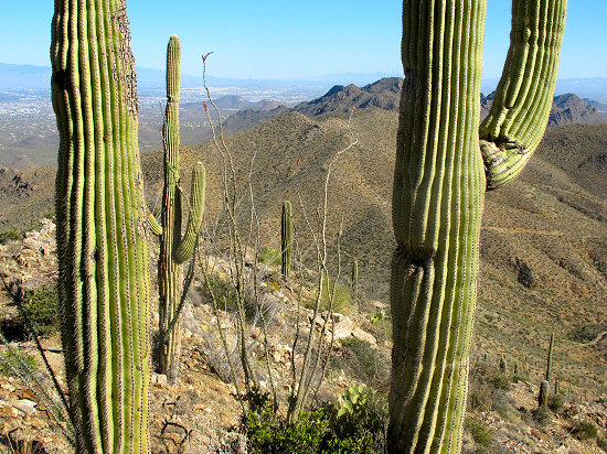 Arizona Bike Tour, Saguaro Cactus