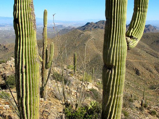 Arizona Bike Tour, Saguaro Cactus