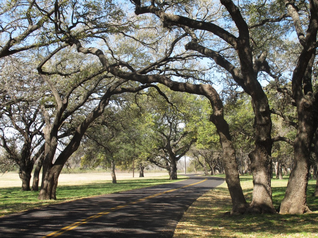 Winding roads await in Texas Hill Country