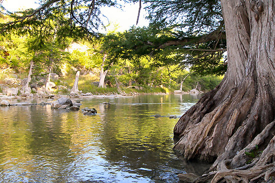 Cypress along the Guadalupe River