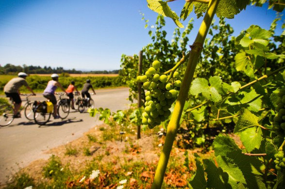 Wineries abound in the Willamette Valley