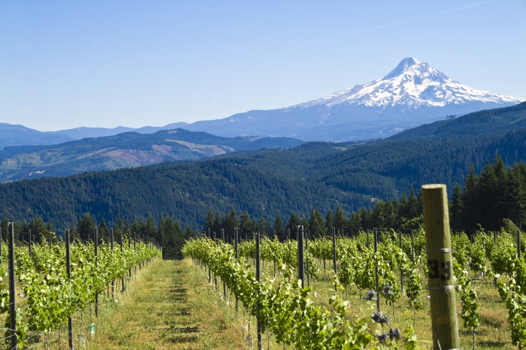 Willamette Valley Bike Tour