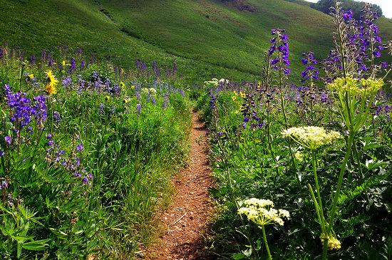 Teocalli Ridge Singletrack