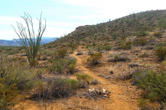 Big Bend Ranch State Park singletrack