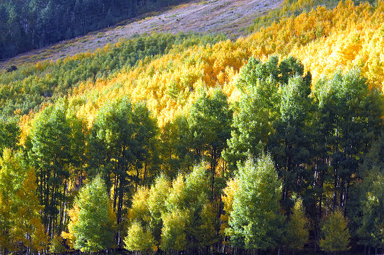 Autumn in Colorado!