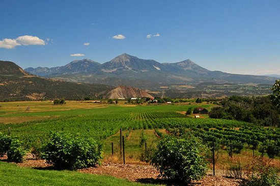 Colorado orchards and vineyards