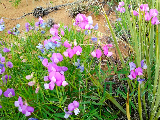 Spring flowers in the desert