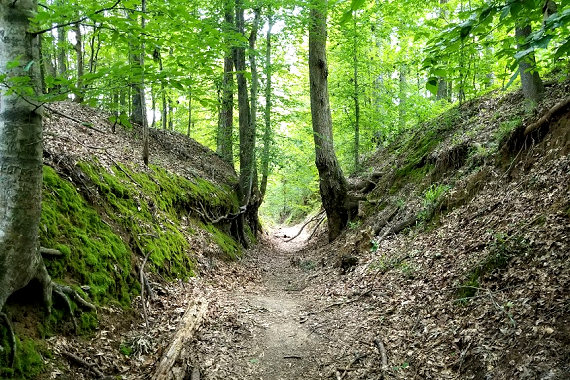 The Sunken Trace near Port Gibson, MS