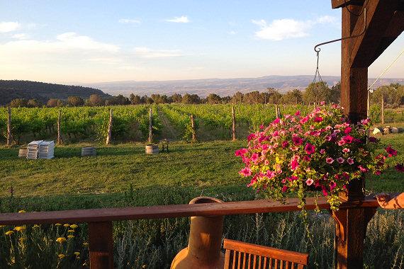 Vineyard on Roger's Mesa